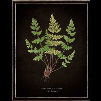 13W/17H Framed Glass Print Fern I Black
