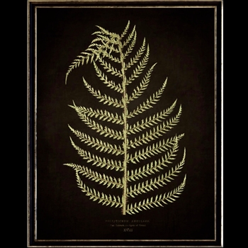 13W/17H Framed Glass Print Fern E Black
