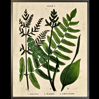 23W/29H Framed Glass Print Fern Collage B