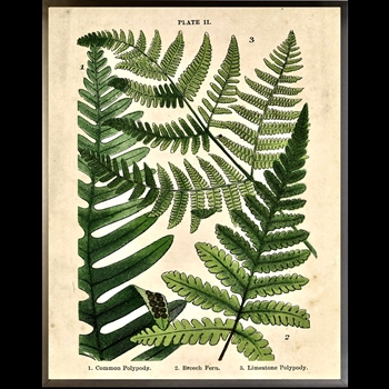23W/29H Framed Glass Print Fern Collage G