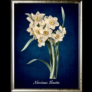 18W/24H Framed Glass Print  Narcissus Azure