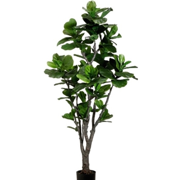Fiddle Leaf Tree Green 6FT