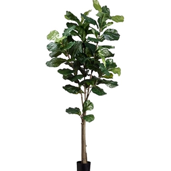 Fiddle Leaf Tree Green 5FT