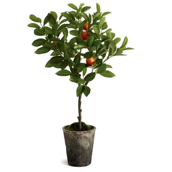 Citrus Topiary - Orange Fruiting 6W/28H