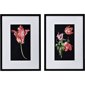 18W/28H Framed Glass Print Parrot Tulips Black