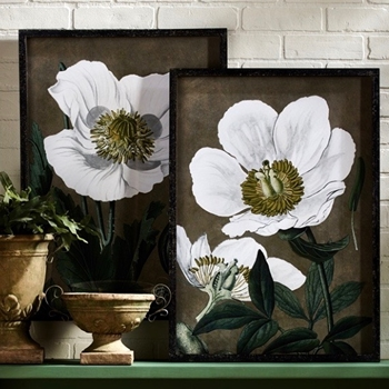 20W/28H Framed Print - White Poppies