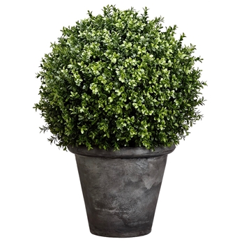 Boxwood Topiary Grey Pot XL 16W/30H