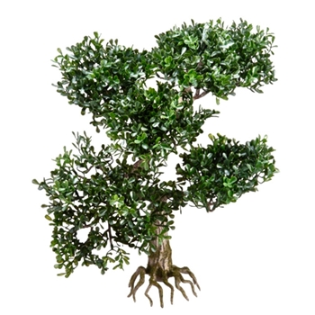 Bonsai Tree Tea Tree 16in Bare Root