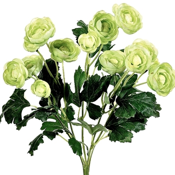 55.  Ranunculus  Bouquet 12 Bloom Green 13in