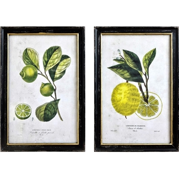 20W/28H Framed Glass Print - Vintage Lemon Lime