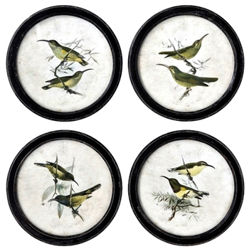 14W/14H Framed Print - Birds Round - Sold Individually