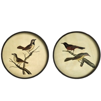 12W/12H Framed Print - Round Vintage Birds Sold Individually