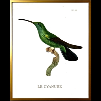 12W/16H Framed Glass Print Hummingbird #11 Left