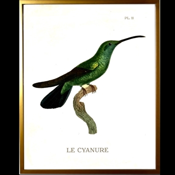 12W/16H Framed Glass Print Hummingbird #11 Right