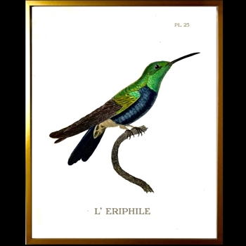 12W/16H Framed Glass Print Hummingbird #25 Right