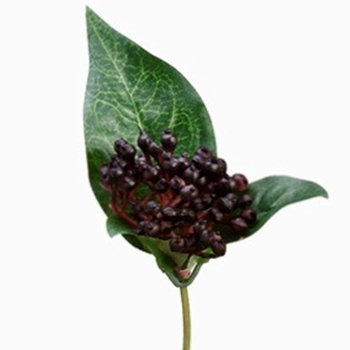 Berry - Pick Viburnum Burgundy 8In - ZGS104-BK