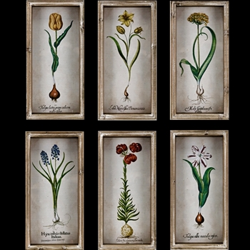08W/16H Framed Print - Vintage Bulbs - Sold Individually