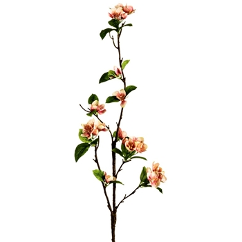 Blossom - Quince Coral 31in - FSB040-CO/TT