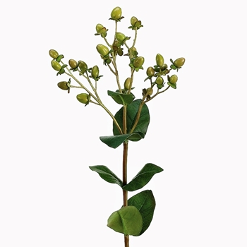 Berry - Hypericum Pick Kiwi 24in - JTH200-GR