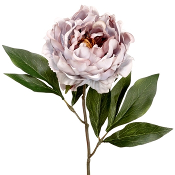 Peony - Antique Mauve 18in - FSP435-GY
