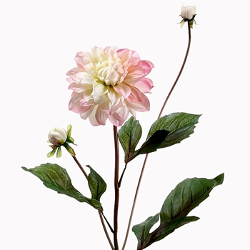 Dahlia - Petal Pink Cream 26in 2Bud - HSD613-PK/CR