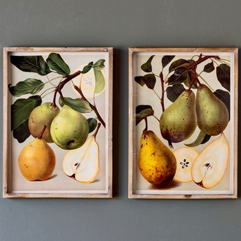 15W/20H Framed Print - Bartlett Pears 2 Styles Sold Individually