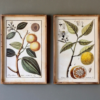 16W/24H Framed Print - Botanical Citrus 2 Styles Sold Individually