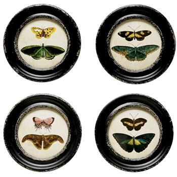 10W/10H Framed Print - Butterflies & Moths Round - Sold Individually