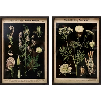 16W/22H Framed Print - Botanica on Black - Sold Individually