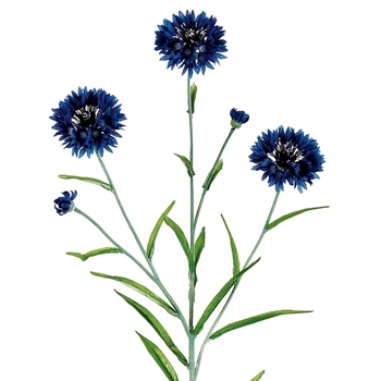 Cornflower - Indigo Blue 25in
