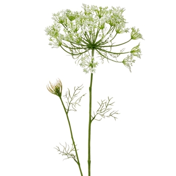 Blossom - Dill Weed Cream 38in FSD403-CR