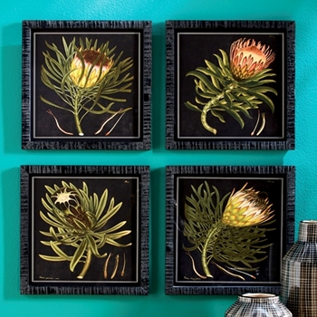12W/12H Framed Print - Protea on Black 4 Asst Sold Individually