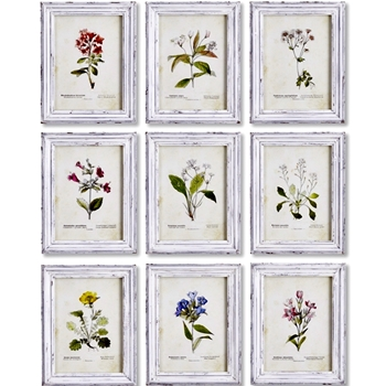 11W/14H Framed Print - Meadow Flower Study 9 Asst Sold Individually