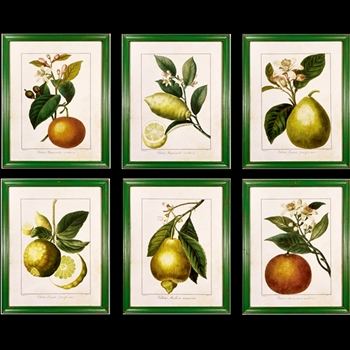 22W/28H Framed Print - Citrus Fruits 6 Asst Sold Individually