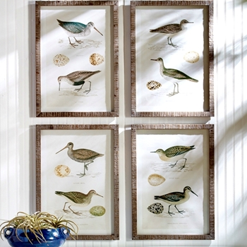 20W/28H Framed Print - Coastal Birds 4 Asst Sold Individually