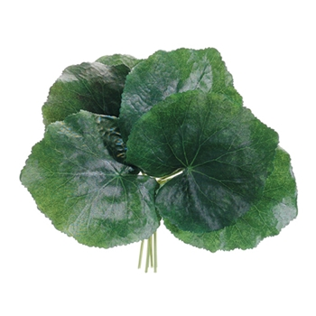 Galax Bundle Green Leaf 8in