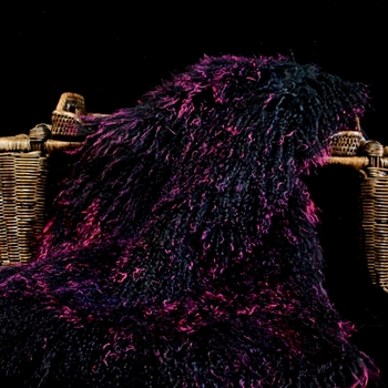 90. Fuchsia Tibet Mongolian Fur Throw 47W/23D  Tips on Black