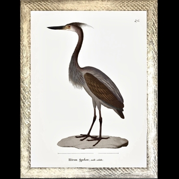 25W/31H Framed Glass Print - Shore Bird Heron Typhon