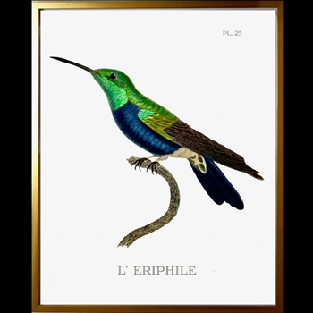 12W/16H Framed Glass Print Hummingbird #25 Left